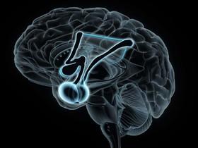 مغز مبتلایان به افسردگی چه تفاوتی با مغز دیگران دارد؟