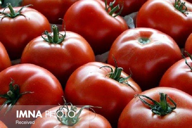 قیمت گوجه با متعادلتر شدن هوا کاهش می یابد