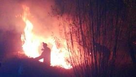درختان سیب سمیرم در آتش سوختند