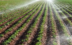 ۱۵ درصد زمینهای کشاورزی اصفهان با روشهای نوین آبیاری می شود