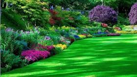 فضای سبز شهری ۵۰ درصد کمآبیاری دارد