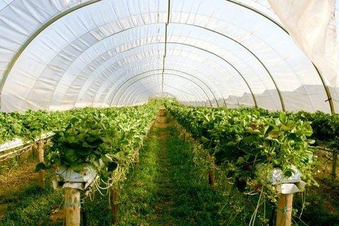 احداث و بهرهبرداری از ۱۵۰۰ هکتار گلخانه در کشور