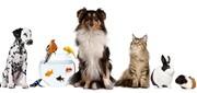 حیوانات درمانگر