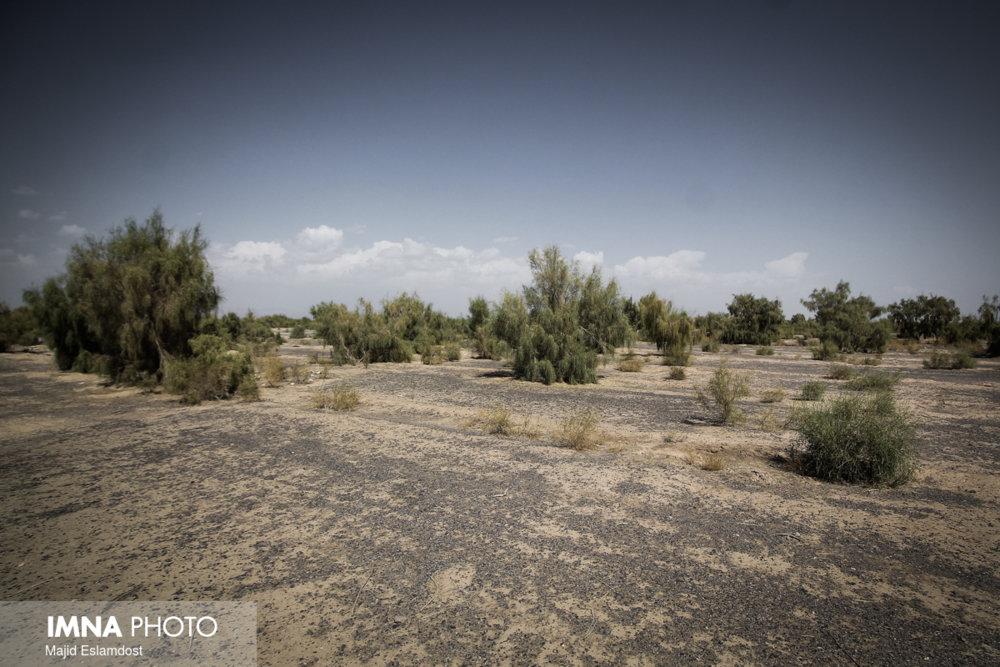 شناسایی ۹۰ کانون بیماری سالک در استان اصفهان