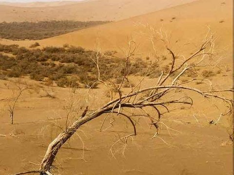 Combat Desertification and Drought