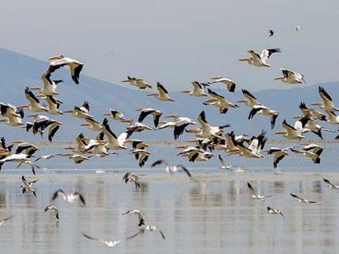 ۱۸۵۰ پرنده تاکنون در تالاب میانکاله جان باختند