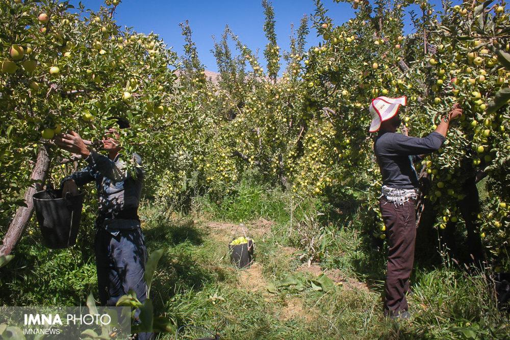 حمایت مدیریت شهری ارومیه از صادرات محصولات کشاورزی