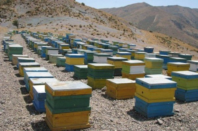 تولید عسل نطنز ۱۰ درصد کاهش یافت
