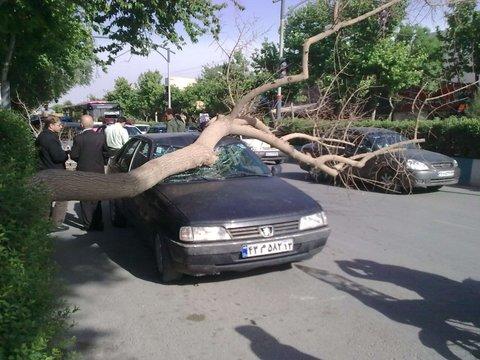 ۷ حادثه آبگرفتگی و سقوط درخت درپی بارندگیهای روز گذشته