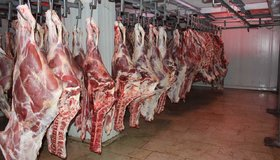 قیمت گوشت قرمز کاهش مییابد/ لزوم هویتگذاری دام سبک و سنگین در بازارگاه