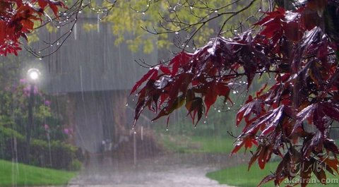 بارش ۵۳.۵ میلیمتر باران در شهرضا