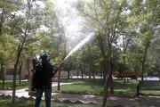 عملیات سمپاشی بهاره درختان در سنندج آغاز شد