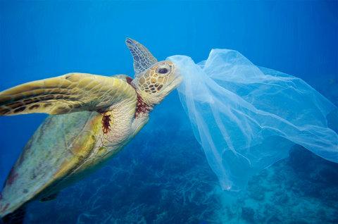 کیسههای پلاستیکی و نابودی هزاران گونه جانوری از زمین تا دریا