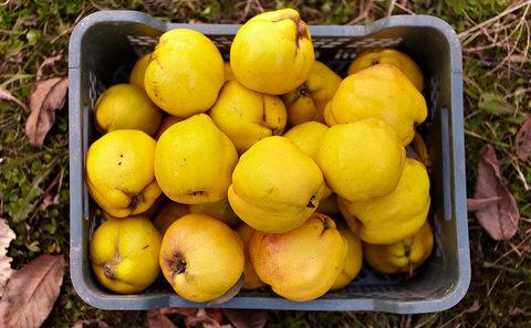 برگزاری جشنواره میوه باعث توسعه صنعت گردشگری شهری میشود