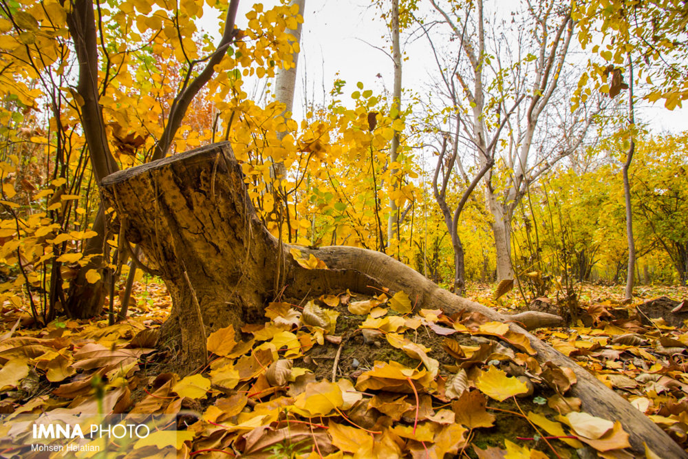 """جلوه """"پاییز هزار رنگ"""" در گرگان"""