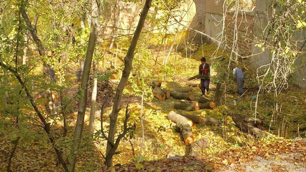نوای سوگ در باغات خوانسار!