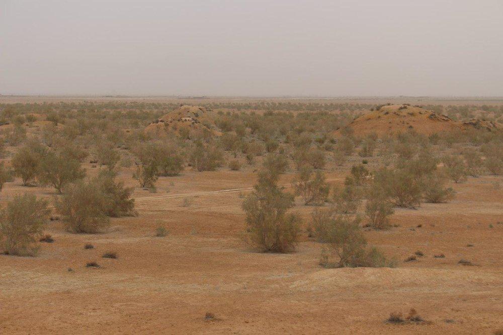 """""""تاغ"""" در بیابانزدایی نزدیک مناطق مسکونی کاشته نمیشود"""
