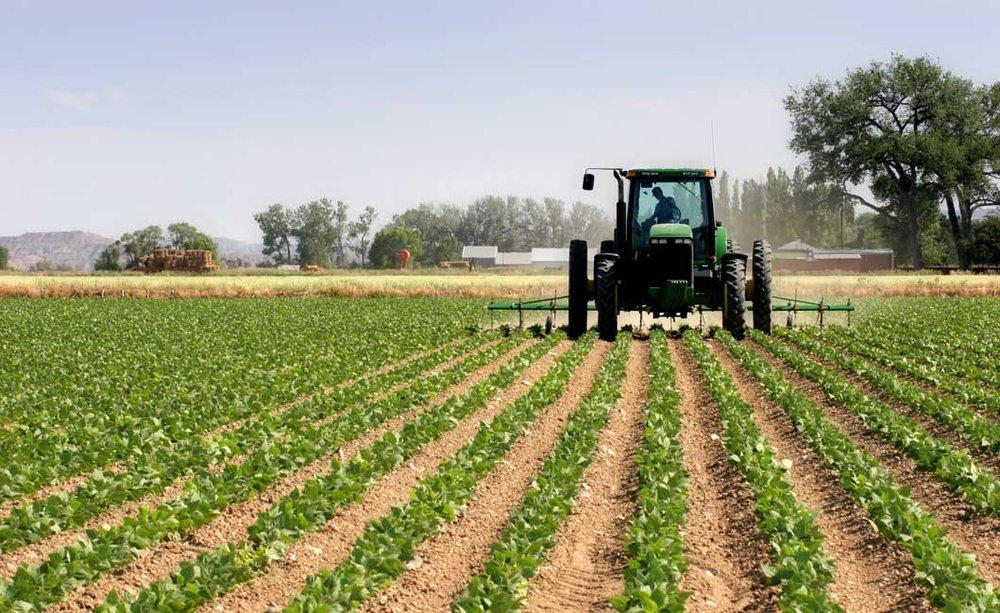 کشاورزان در مورد طرح کشت جایگزین سردرگم هستند