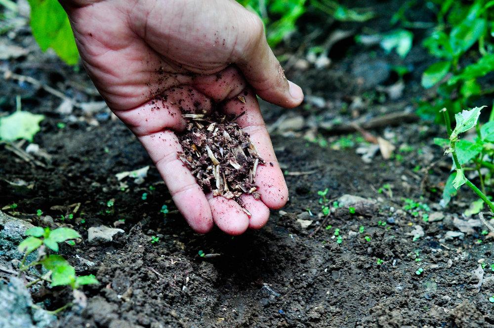کودهای کشاورزی شرکتهای دانش بنیان توزیع میشود