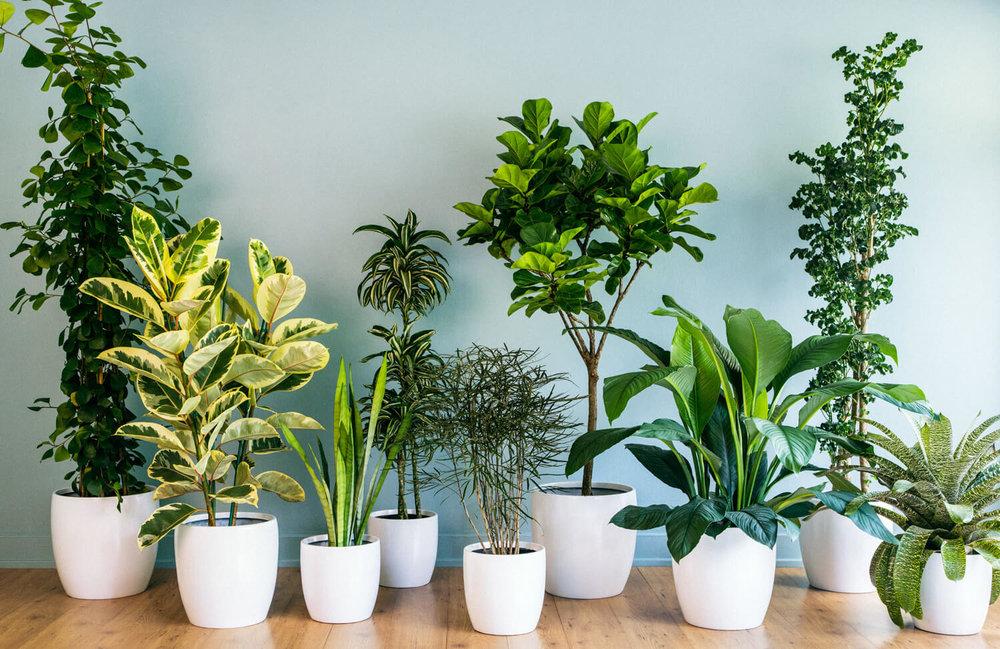بهترین گیاهان برای نگهداری در داخل آپارتمان کدام است؟