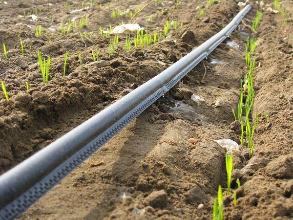 اجرای بزرگترین طرح آبرسانی قطرهای در منطقه ۸