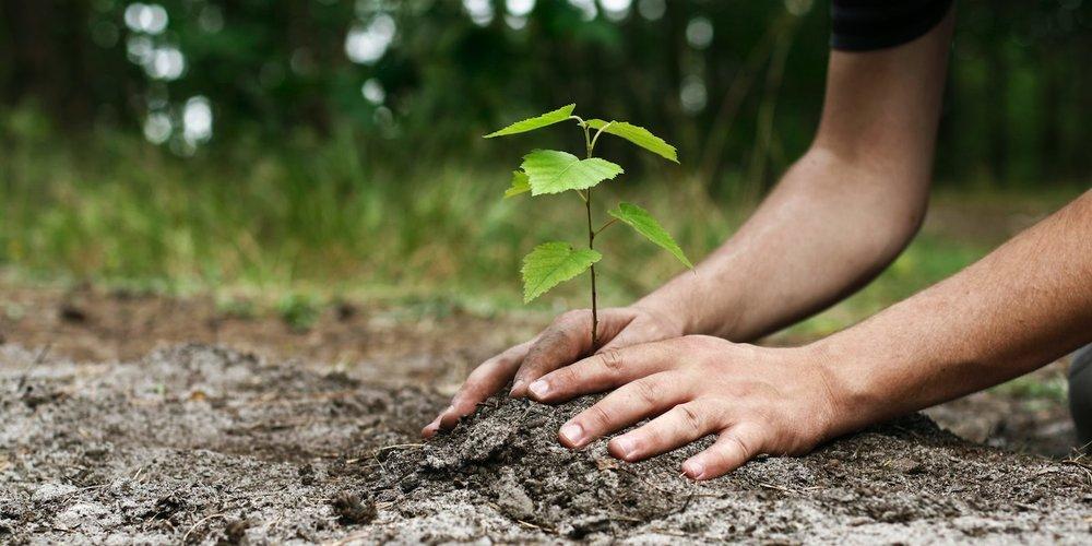 Every sapling; a hope