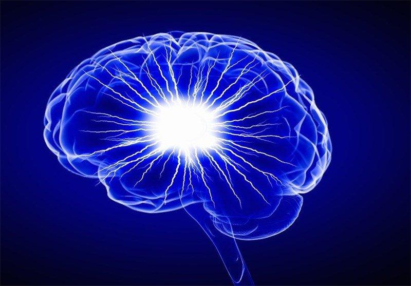 عملکرد مغز چاقها چگونه است؟