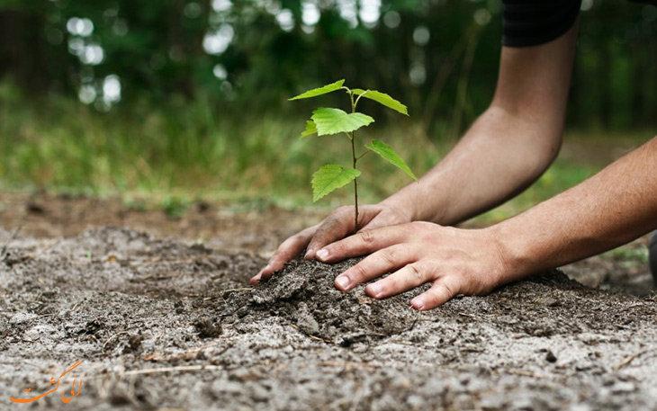 برگزاری مراسم روز درختکاری به یاد شهدای مدافع حریم امنیت