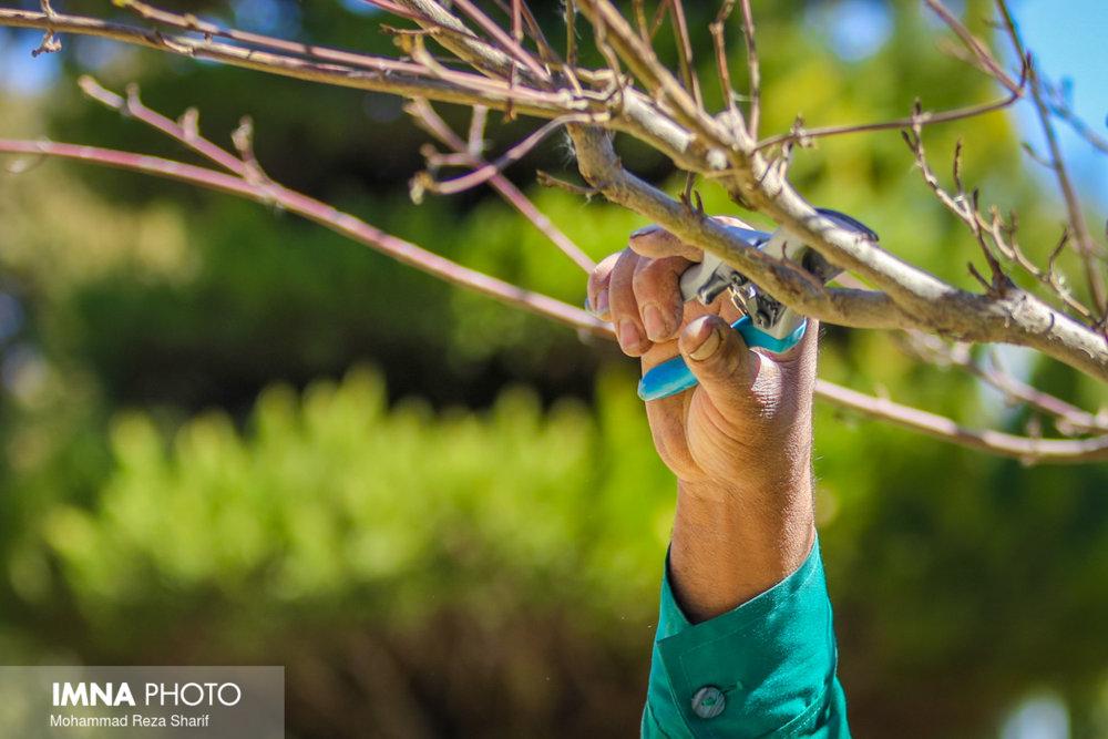 تغییر کاربری باغات نگران کننده است/ راهاندازی باغات پایدار در دست بررسی