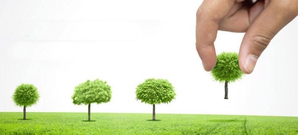 کند و کوب، روشی برای ارتقای رشد کیفی درختان مشهد