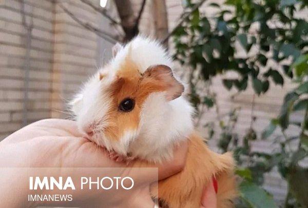 محیطزیستیها خواستار توقف خرید وفروش حیوانات در سایت دیوار شدند