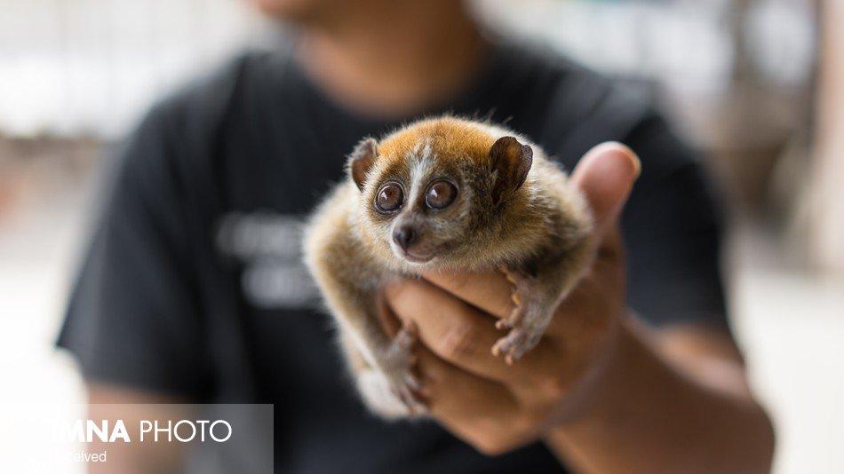 رسیدگی به خرید و فروش حیوانات در اینستاگرام