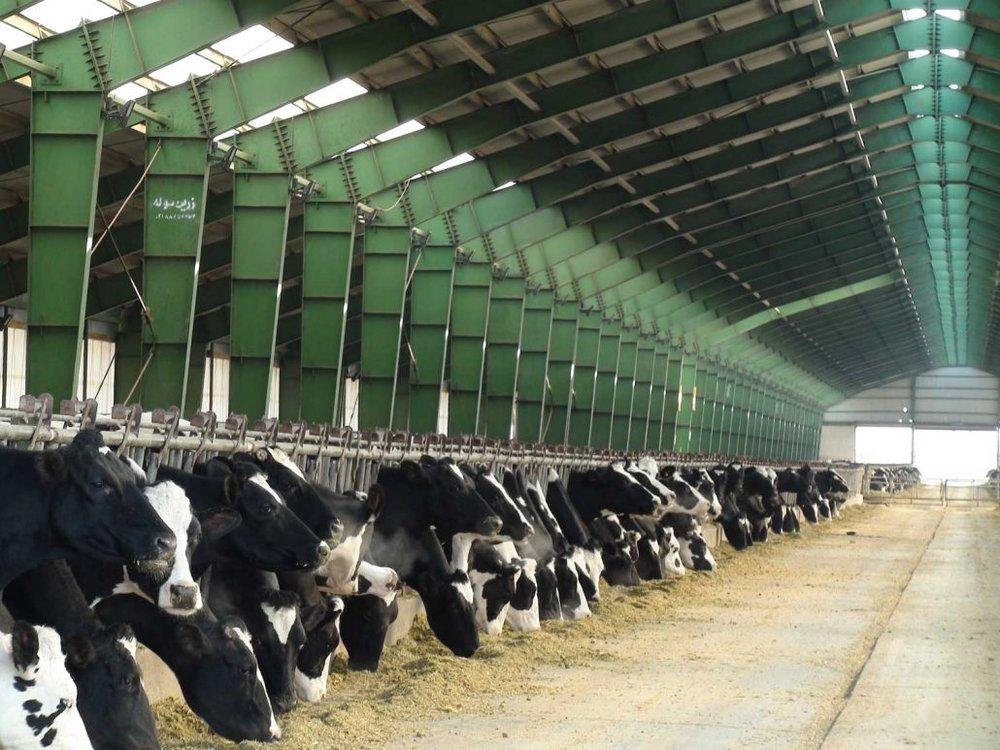 تامین نهادهها از مهمترین دغدغههای تولیدکنندگان دامی است