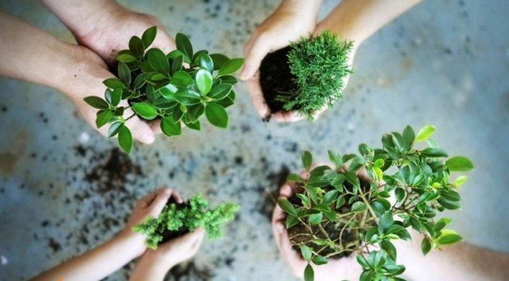 ابلاغ دستورالعمل پویش درختکاری به شهرداریها