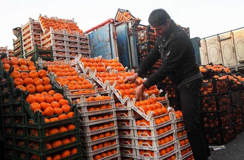 میوه تنظیم بازار شب عید آماده توزیع است