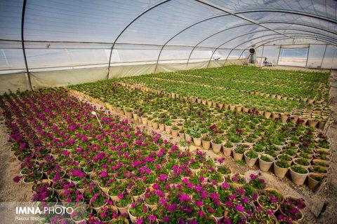 دعوت به همکاری منطقه ویژه علم و فناوری اصفهان برای دریافت الگوی گلخانههای خودپایدار