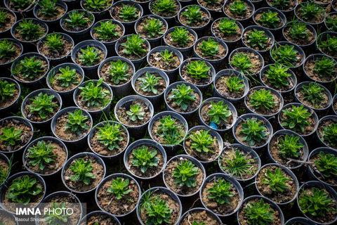 شناسایی بیش از ۲۴۰ گونه گیاهی مرتعی بومی مشهد