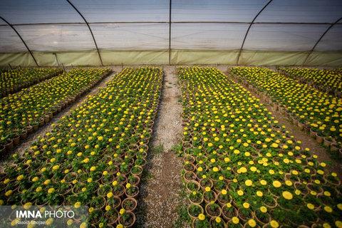 اختصاص ۵ هزار میلیارد تومان برای احداث گلخانهها در سال جاری