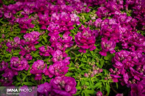 تولید بیش از ۸۷ هزار گونه گیاهی در نهالستان شهرداری شهرضا