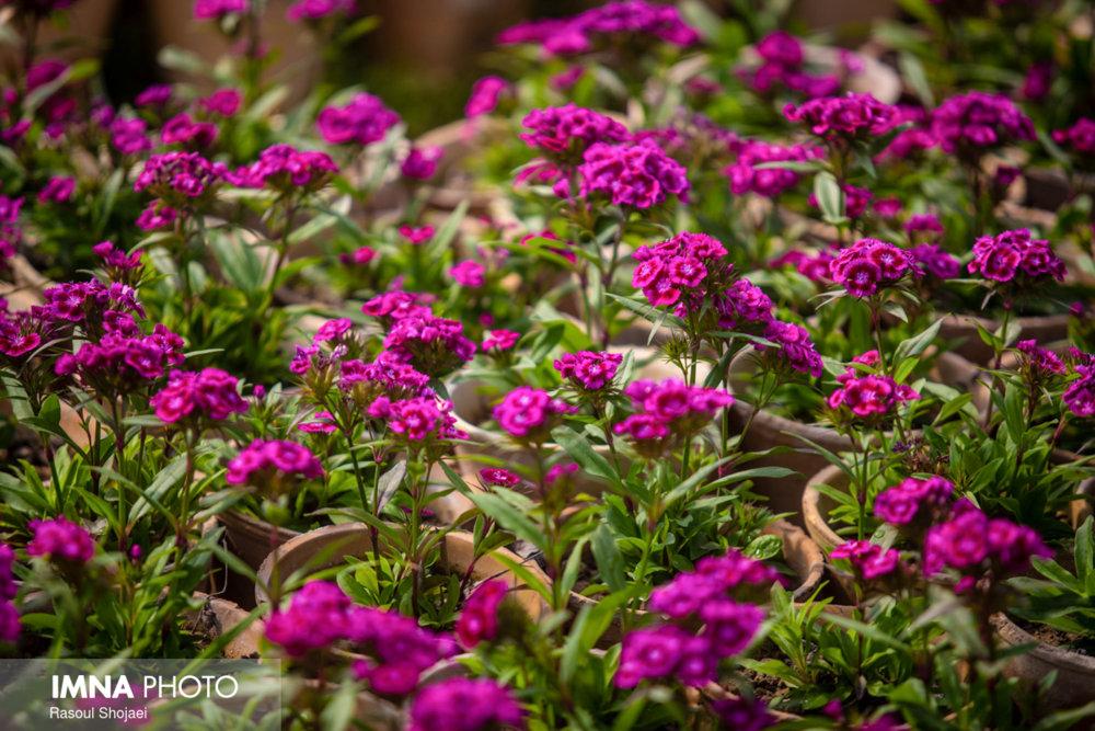 خودکفایی شهرداری گلپایگان در تولید گل و گیاه