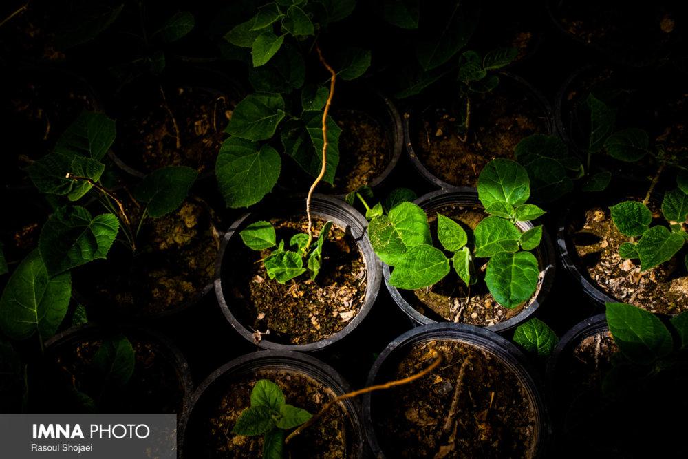 تولید ۴۹ هزار جعبه گل در گلخانه شهرداری سنندج