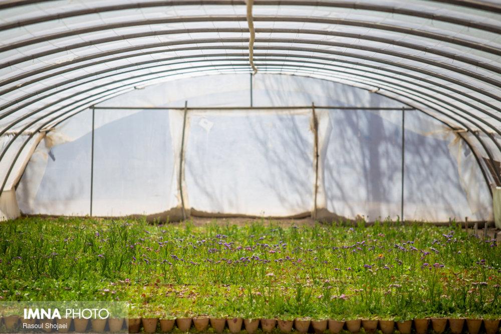 حمایت مدیریت شهری گلشن از فعالان صنعت گلخانهای