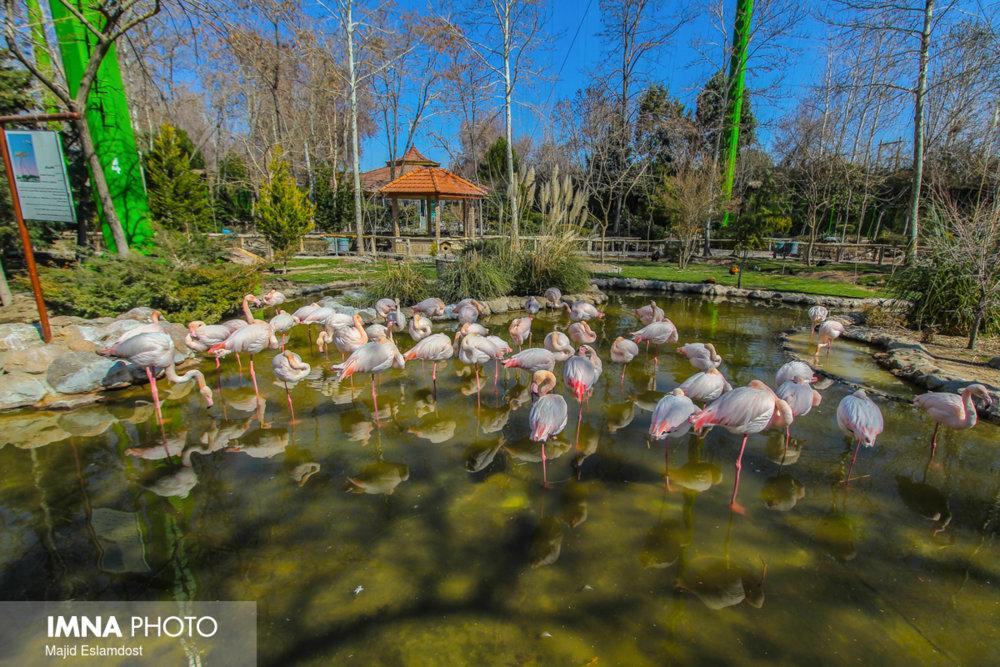 احداث باغ پرندگان در غرب کشور