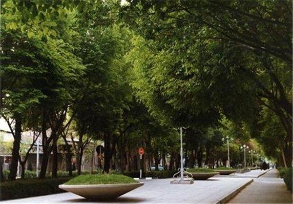 کاشت درختان چنار ۲۰ ساله چهارباغ اصفهان را در نوروز زیباتر کرد