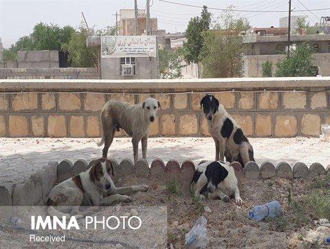 ایجاد پناهگاه سگهای بلاصاحب در انزلی