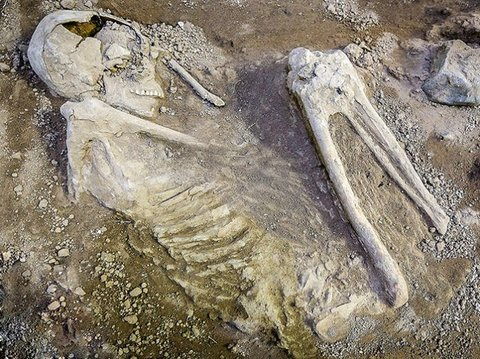 Ancient skeleton dating back to Sassanid era discovered in Isfahan