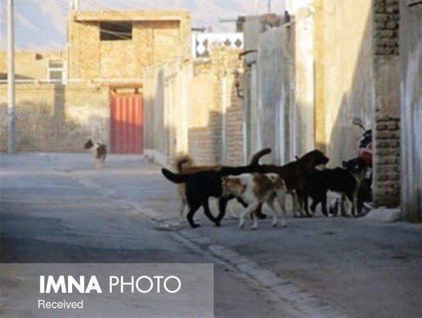 جلوگیری از ورود سگهای بلاصاحب از حومه شهر به داخل بوشهر