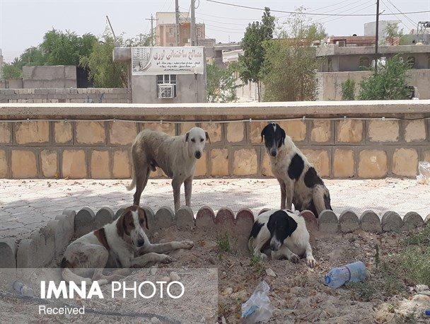 زندهگیری ۱۴ قلاده سگ در بوئینمیاندشت