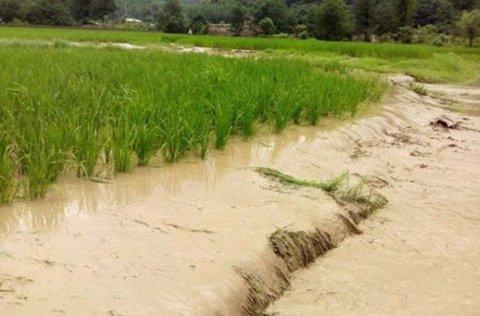 پرداخت ۶۵ میلیارد و ۴۱۳ میلیون تومان غرامت به کشاورزان سیلزده