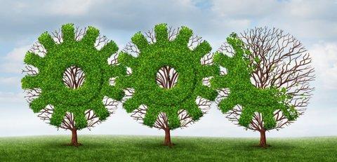 اهمیت استفاده از گیاهان بومی در گسترش فضای سبز  پایدار